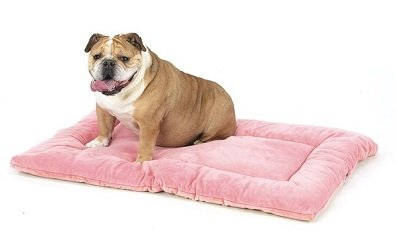 dog crate pad - house soiling
